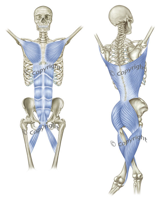 The Ipsilateral Functional Line